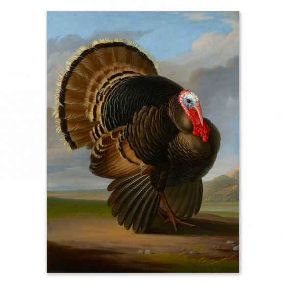 Wild Turkey Image 1